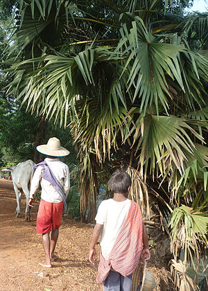 Krama - Farmer and his son wearing krama khmer scarves in Siem Reap