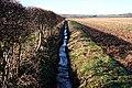 Field-edge Ditch - geograph.org.uk - 686178.jpg