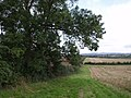 Field near Tintinhull - geograph.org.uk - 540984.jpg