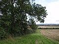Field near Tintinhull - geograph.org.uk - 540984.jpg