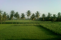 Fields near Yerravaram 01.jpg