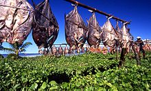 rows of fish hang from string, drying in the sun