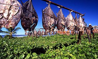 Food drying - Flattened fish drying in the sun in Madagascar. Fish are preserved through such traditional methods as drying, smoking and salting.