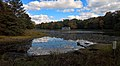 Flattail Lake, Reinstein Woods Nature Preserve, October 2016.jpg