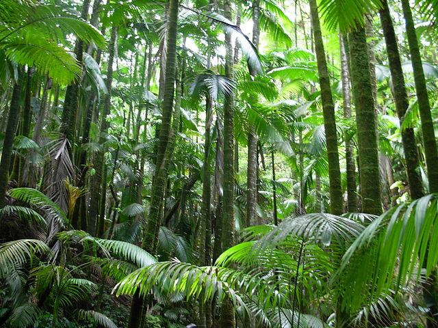 V tropických dažďových pralesoch sú výborné podmienky na rast rastlín, preto sú tam také bujné
