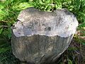 Flickr - brewbooks - Petrified trunk of Araucarioxylon (1).jpg