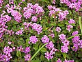 Floral arrangement 019 (6728955847).jpg
