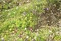Floral mix (Grubigstein) (24491481642).jpg