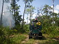 Florida Panther Prescribed Fire 6 21 13 (9143873063).jpg