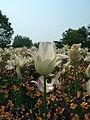Flower-center142544.jpg