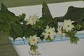 Flower Pavaza malli.jpg