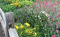 Flower garden 2.jpg