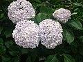 Flower like a bouquet.jpg