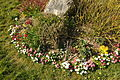 Flowers in Hannafore (0739).jpg