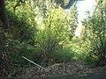 Foliage - panoramio (1).jpg