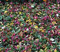 Foliage and Flowers.JPG