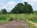 Footpath From Nursery Farm - geograph.org.uk - 467550.jpg