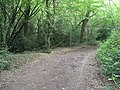 Footpath branching away from Sussex Border Path in Sandpits Wood - geograph.org.uk - 1344911.jpg