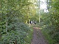 Footpath through Woodland - geograph.org.uk - 269780.jpg