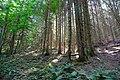 Forêt @ Le Grand-Bornand (50959884538).jpg
