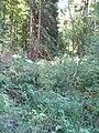 Forbach Quelle mit Blick Oberlauf.jpg