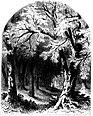 Forest Hymn pg 31.jpg