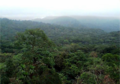 Forest Reserve of Kimbi.png