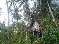 Forest hut.JPG