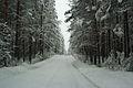 Forest near Ob river in Altai Region 29.JPG