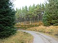 Forest track - geograph.org.uk - 630455.jpg