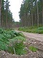 Forestry Road - geograph.org.uk - 519285.jpg