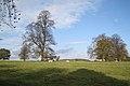 Former parkland near Loes Farm - geograph.org.uk - 1583011.jpg