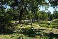 Fort Worth Botanic Garden October 2019 26 (Victor and Cleyone Tinsley Rock Springs Garden).jpg