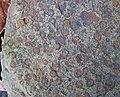 Fossiliferous sandstone (Byer Sandstone, Lower Mississippian; Dugway Outcrop, Newark, Ohio, USA) 2 (32767627515).jpg