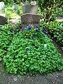 Friedhof heerstraße 2018-05-12 (17).jpg