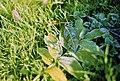 Frozen Grass (68815529).jpeg