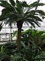 Garden Primeval - US Botanic Gardens 07.jpg
