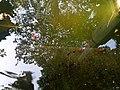 Garden of dreams, Thamel 08.jpg