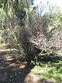 Gardenology.org-IMG 0683 hunt07mar.jpg