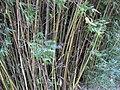 Gardenology.org-IMG 0918 rbgs10dec.jpg
