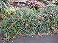 Gardenology.org-IMG 2211 rbgs11jan.jpg