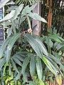 Gardenology.org-IMG 7554 qsbg11mar.jpg