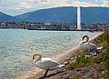 Geneva Lake with fountain of some 140 m heigth since 1951^^ It is a city skymark. - panoramio.jpg