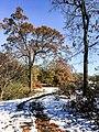 Georgia snow IMG 5438 (38252912874).jpg
