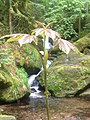 Gertelbach-Wasserfälle-schwarzwald.jpeg
