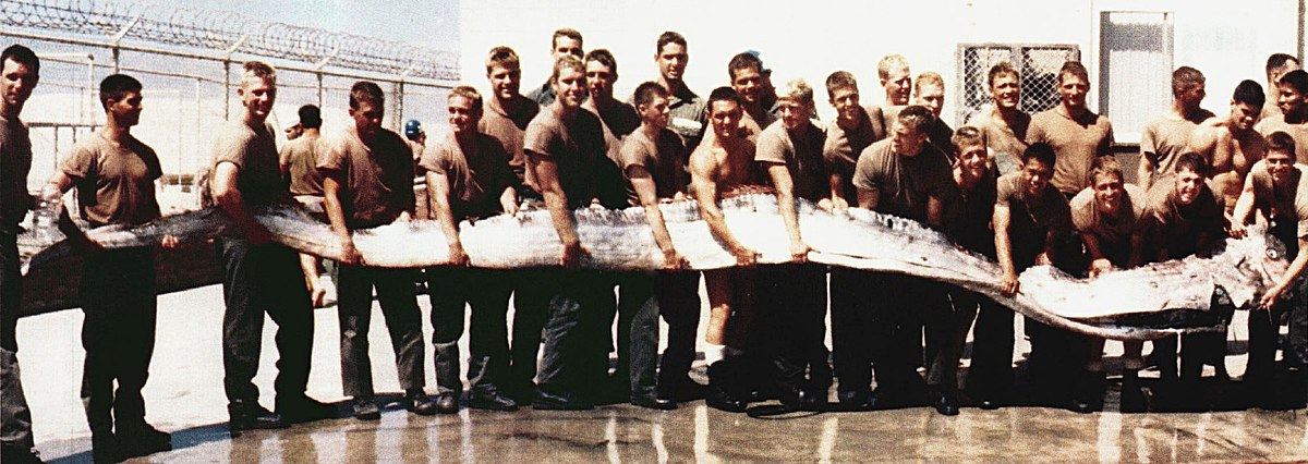 https://upload.wikimedia.org/wikipedia/commons/thumb/9/90/Giant_Oarfish.jpg/1200px-Giant_Oarfish.jpg