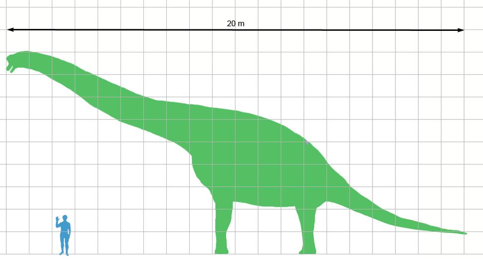 Giraffatitan scale