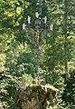Glückskreuz 85936 in A-8630 Walstern.jpg
