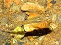 Golden (25799893955).jpg