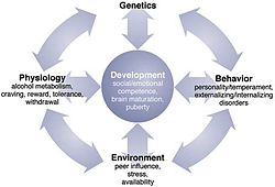 Picture showing how genes, the environment and physiology interact with development, in the context of alcohol abuse